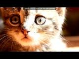 «Кошки» под музыку Говорят не повезет - Жил да был чёрный кот за углом. И кота ненавидел весь дом. Только песня совсем не о том,